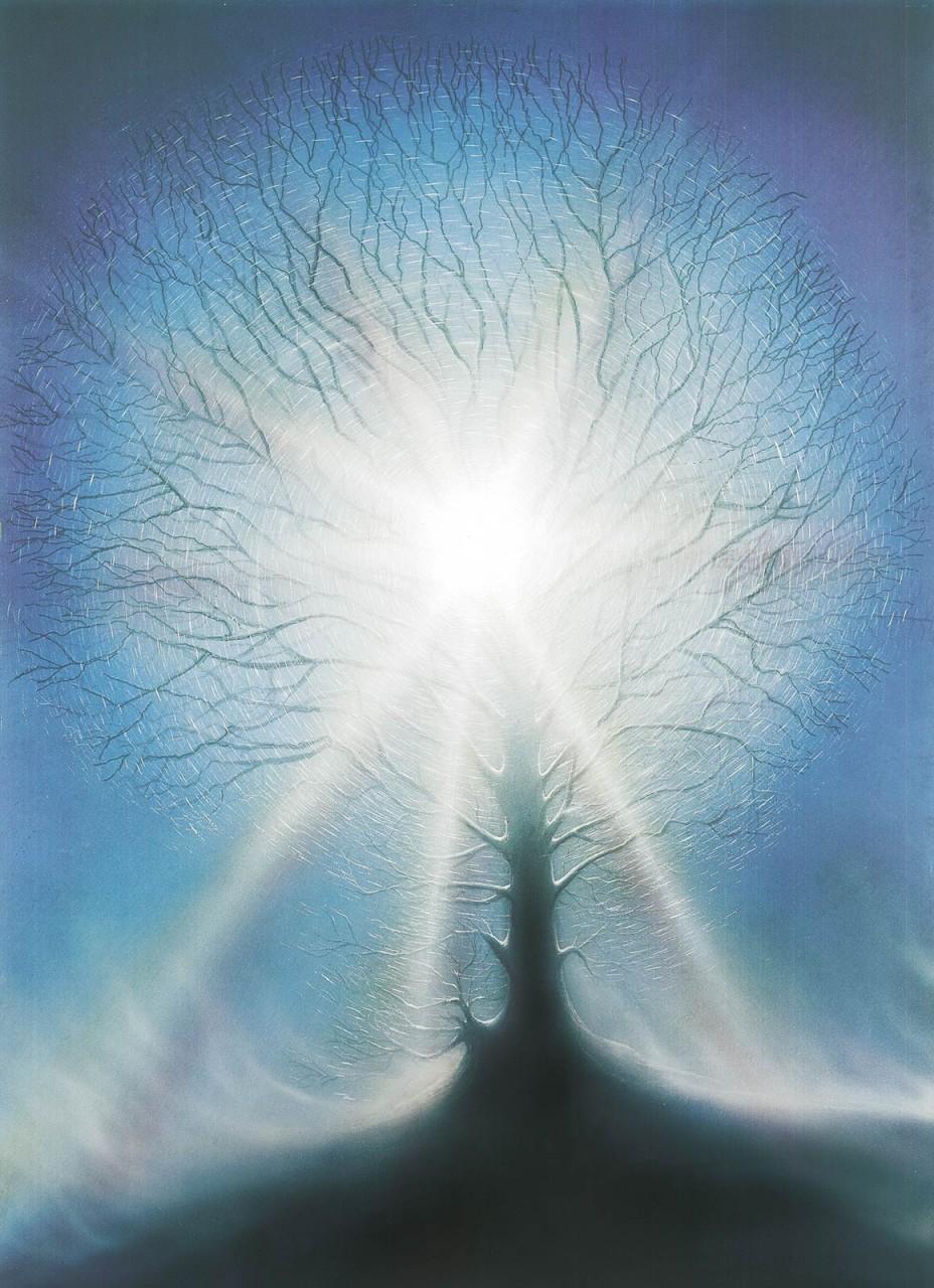 Eisbaum 60/80 u. 30/40 cm verkäuflich