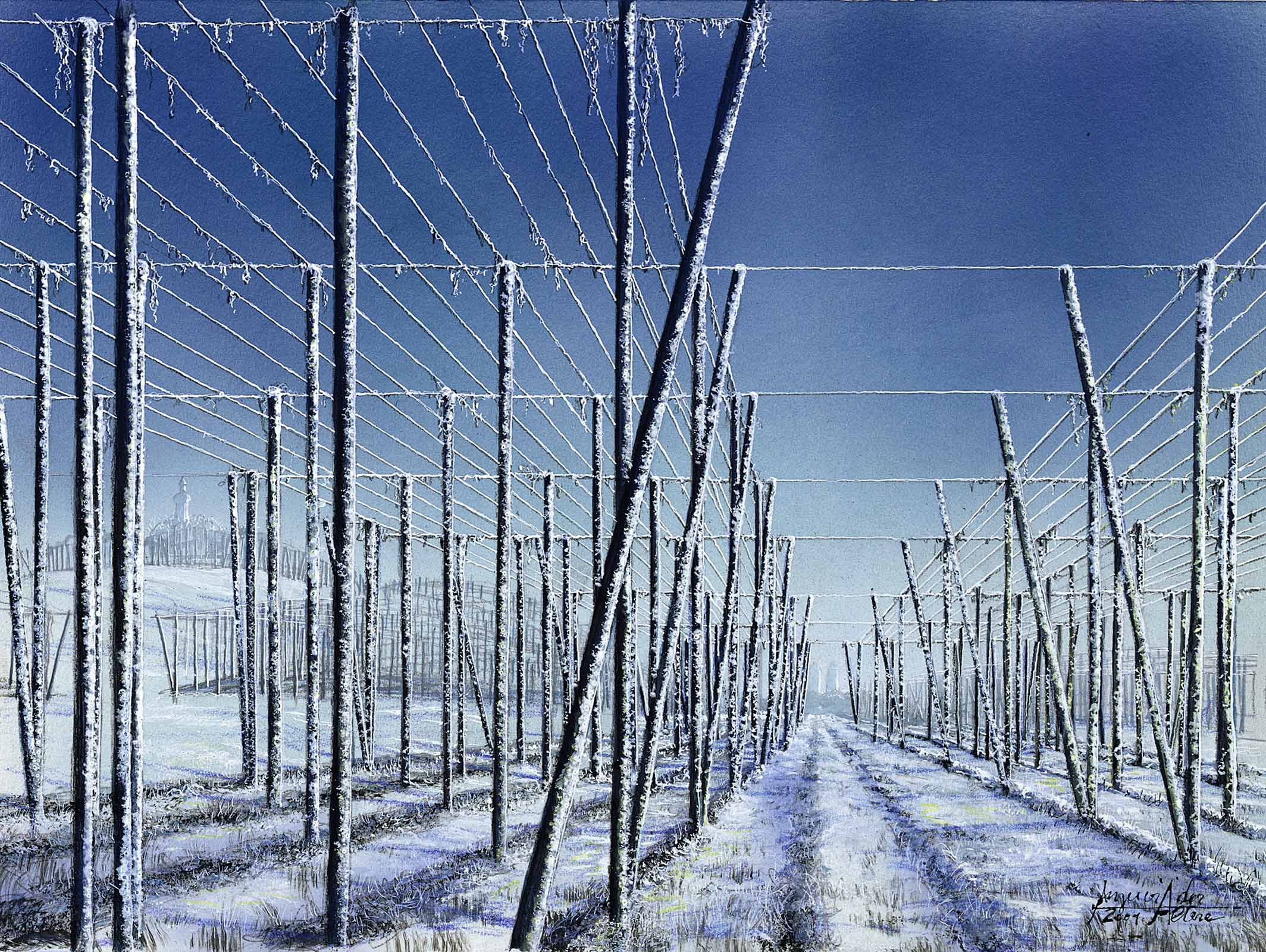 Hopfenfeld Holledau im Winter