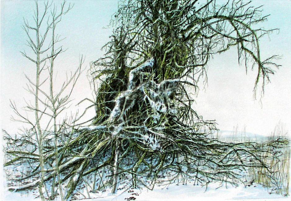 Weidenbaum im Winter